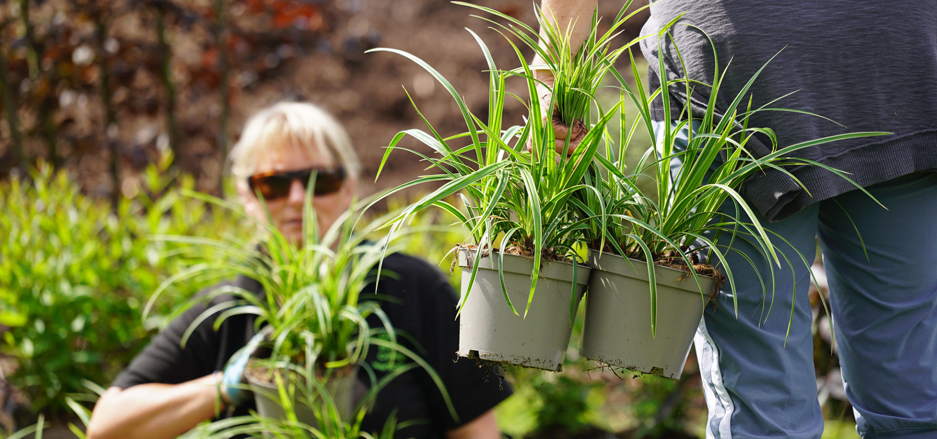 Certificate in Plants and Planting for Garden Design ...